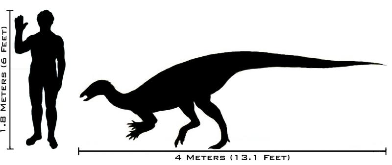 File:Human-thescelosaurus size comparison.png