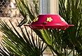 Hummingbird (24479710946).jpg