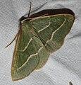 IKAl 20100808 SchmetterlingC.jpg