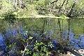 Ichetucknee River 4.jpg