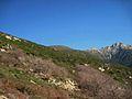 Il sito dell'antico Pedemonte (isola d'Elba).jpg