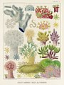 Illustration from The Great Barrier Reef of Australia (1893) by William Saville-Kent from rawpixel's own original publication 00011.jpg