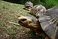 In the eyes of a turtle - panoramio.jpg