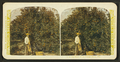 In the heart of an orange grove, Fla, from Robert N. Dennis collection of stereoscopic views.png
