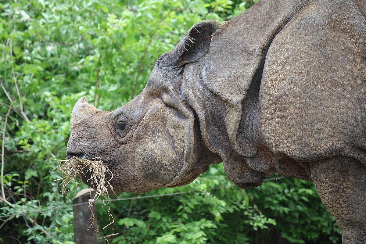 Rhino Wiki