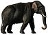 Indian elephant white background.jpg