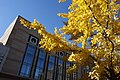 Indiana Convention Center exterior with ginkgo tree.jpg