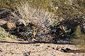 Infantrymen practice defensive tactics during Weapons, Tactics Instructor course 131015-M-OM885-308.jpg