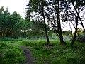 Iping Common, dusk - geograph.org.uk - 1437287.jpg
