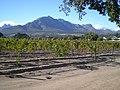 Irrigation des vignes à Stellenbosch.jpg