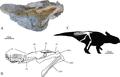 Ischioceratops.PNG