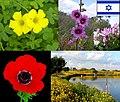 Israel-flowers001.jpg