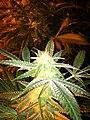 It's weed- 2013-07-27 11-18.jpg
