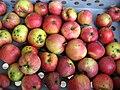 Jablka (8).jpg