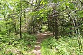Jacks Knob Trail, Brasstown Bald, May 2019 2.jpg