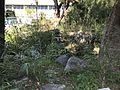 Japanese garden in Hakozaki Campus of Kyushu University.jpg