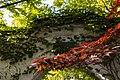 Japanischer Ahorn (220463197).jpeg
