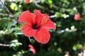 Jardim Botânico Tropical (43981569314).jpg