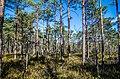 Jersikas pagasts, Latvia - panoramio (13).jpg