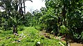 Kampung Sayong - panoramio (2).jpg