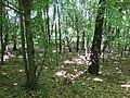 Kaniv Nature Reserve (May 2018) 68.jpg