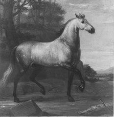 Karl XI:s livhäst Visir
