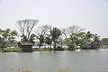 Karnamadhabpur Wetland - Kalyani Expressway - Panihati - Kolkata 2017-03-30 0900.JPG