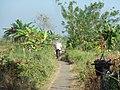 Kasepuhan, Batang Sub-District, Batang Regency, Central Java, Indonesia - panoramio.jpg