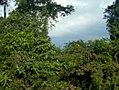 Kasokwa Forest 03.jpg