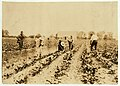 Kastvan family, beet workers near Corunna, hoeing beets. They are Hungarians who came to Mich. last Spring with a trainload of immigrants (several hundred of them) from New York City. Now LOC nclc.00690.jpg
