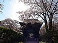 Keitokuin Temple cherry blossoms.JPG