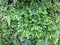 Kerala Flora 20180825 120235.jpg