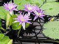 Kew Gardens 0396.JPG