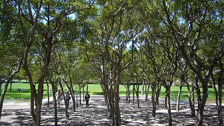 Kahn intended for visitors to enter through the thoughtful landscaping at the front entry... Kimbell Art Museum-trees at entry courtyard.jpg
