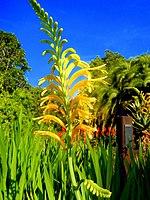 Kirstenbosch National Botanical Garden by ArmAg (21).jpg