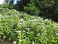 Kobe Municipal Arboretum in 2013-6-22 No,35.JPG