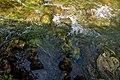 Kolpa River 1314.jpg