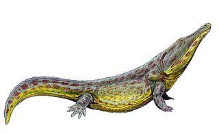 <i>Konzhukovia</i> genus of amphibians (fossil)