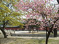 Korea-Seoul-Changdeokgung-Geumcheongyo and trees-01.jpg
