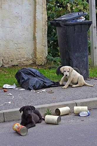 Street dog - Stray dogs in Slovenia