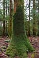 Kumano Kodo Pilgrimage Trail, Koguchi to Nachisan, Japan (48912307128).jpg