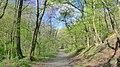 LESNÁ CESTA - FOREST PATH - panoramio.jpg