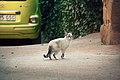 La gatita (8377119025).jpg