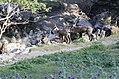 La vallée sauvage chamois.jpg