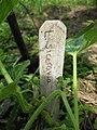 Lagenaria siceraria sign - Gardenology.org-IMG 0615 bbg09.jpg