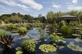 Lagoon in the Shofu-en Japanese Garden (Garden of Pines and Wind in English) at the Denver Botanic Gardens in Denver, Colorado LCCN2015633590.tif