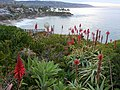 Laguna Beach, California - panoramio - Patrick Nouhailler's… (4).jpg
