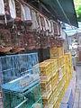 Laika ac Bird Market (6374162361).jpg
