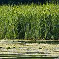 Lake Minnetonka (2622770619).jpg