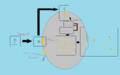 Lambda temperate life cycle.png